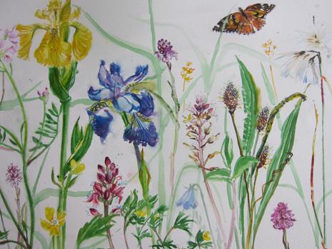 Wild flowers and Tortoiseshell