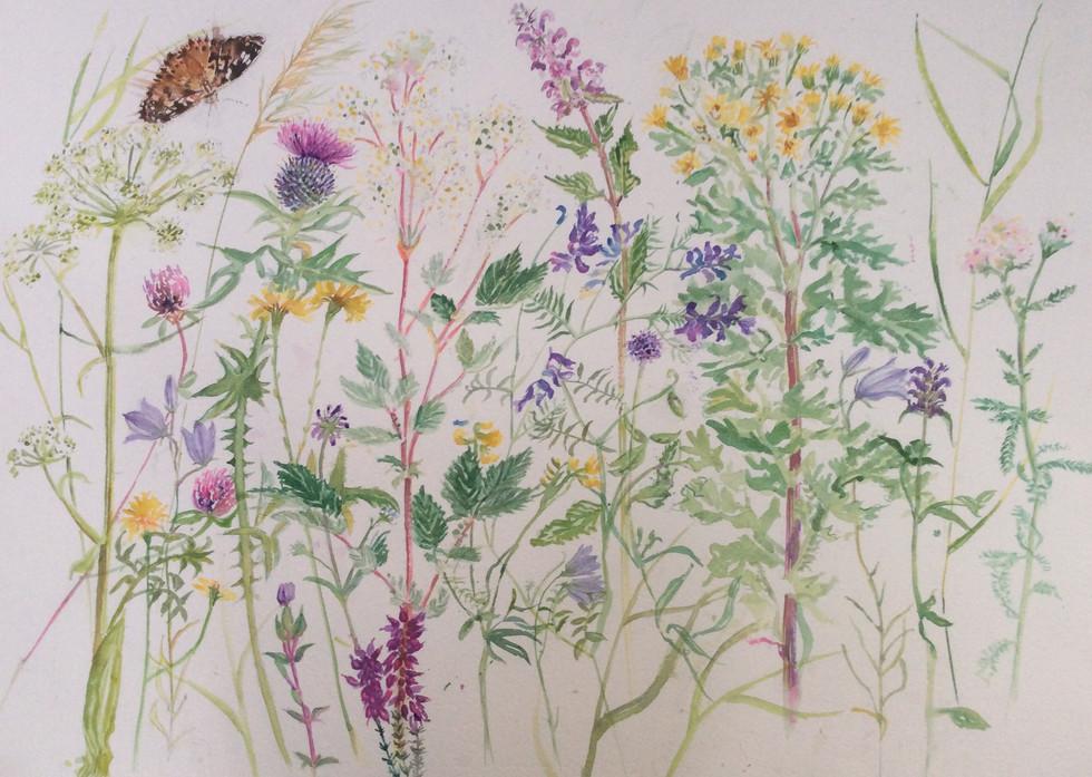 Wild Hebridean Flowers
