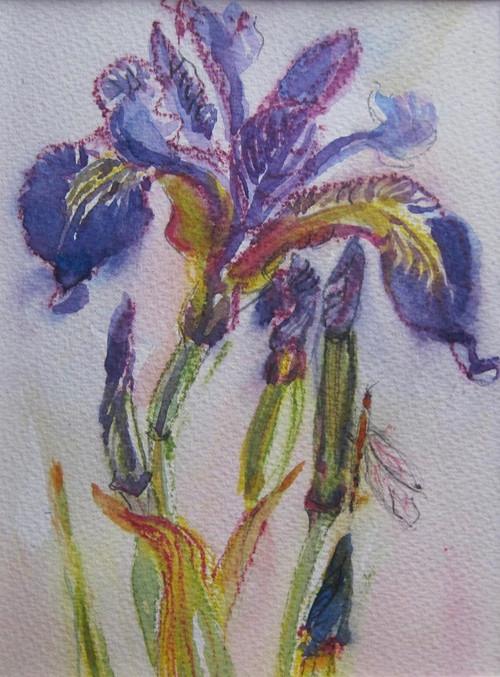 Wild Iris.Strond