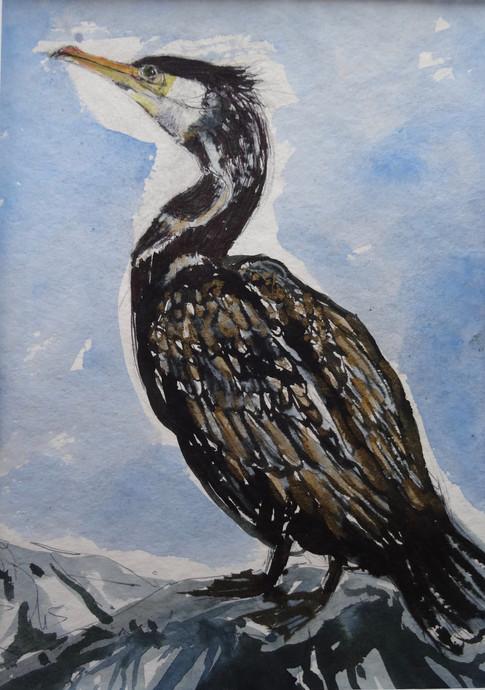 Sgarbh (Cormorant) £400 40x30