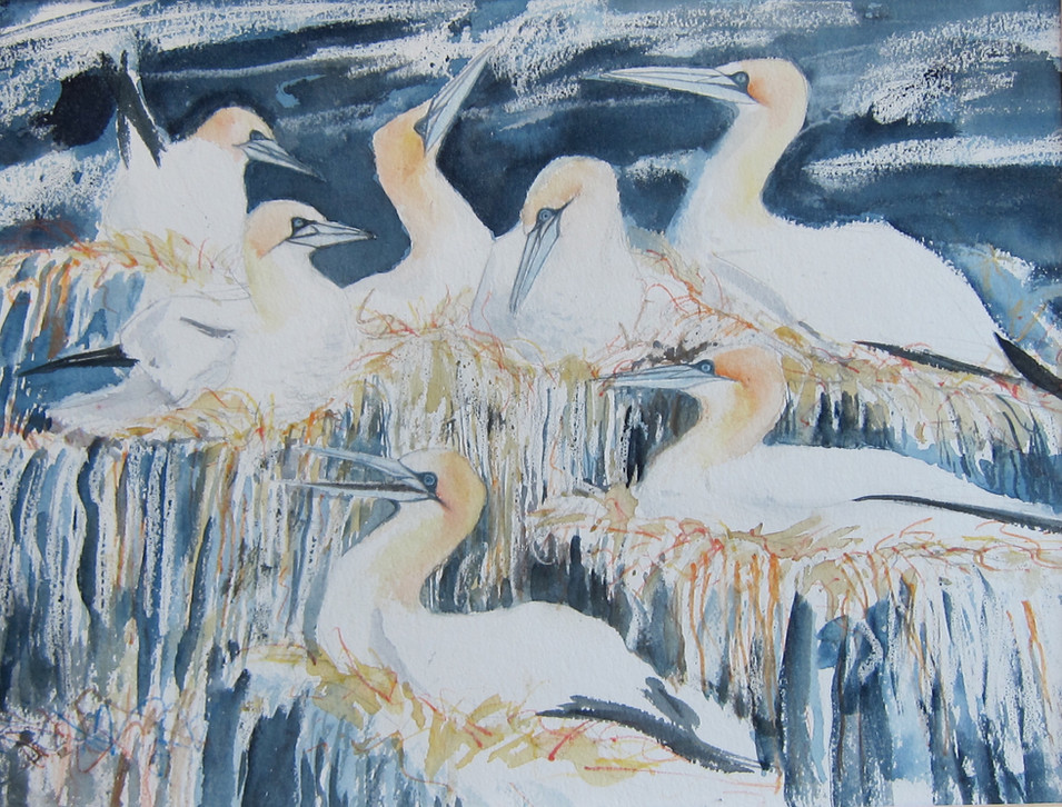 Sulairean Hiort(Gannets St kilda)