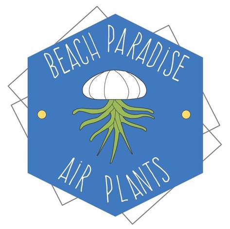 Beach Paradise Air Plants