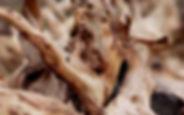 sandalwood.jpg