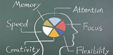 Diagram of brain | adhd testing | learning disorder testing | psychoeducational assessment in Madison, WI 53703 | achievement testing | psychoeducational testing for athletes |  53202 Milwaukee | 54311 Green Bay | Madison, WI 53703