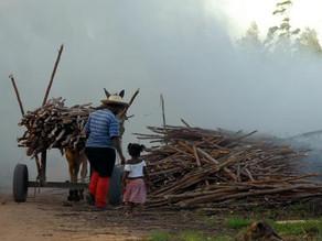 Brasil registra aumento de trabalho infantil entre crianças de 5 a 9 anos