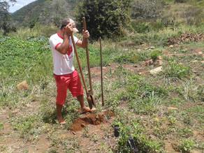 Prefeitura realiza reflorestamento na Cachoeira do Pingas