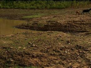 Em PE, 36 dos 39 reservatórios do Sertão estão em colapso, diz Apac