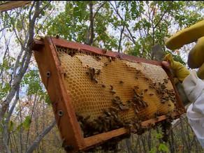 Estiagem prejudica produção de mel que tem queda de mais de 60% em Moreilândia, PE