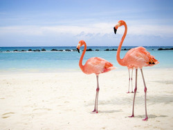 Best-Birding-in-Cuba-Cayo-Coco