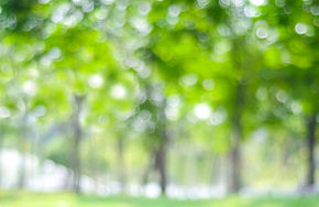 blur-park-with-bokeh-light-background-na