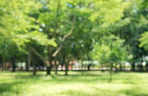 blur-nature-green-park-with-bokeh-sun-li
