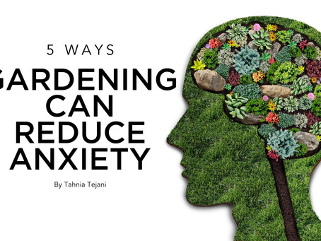5 Ways Gardening Can Reduce Anxiety