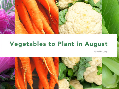 Vegetables to Plant in August