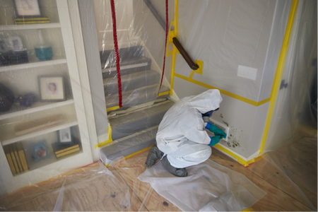 Mold Remediation!.png