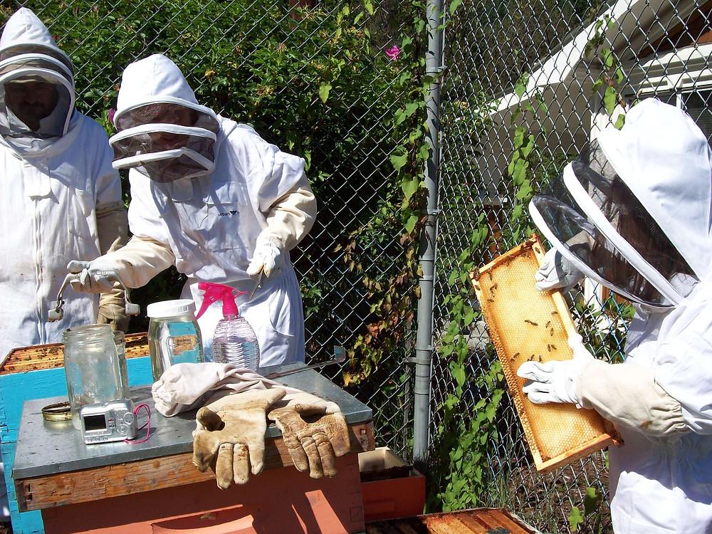 fall 2014 ufv and bees 050.JPG
