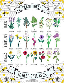 Plants that bees like.