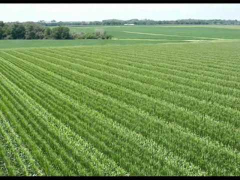 Dina Farms