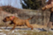 bearclaw kennels andromeda 1b.jpg