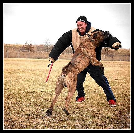 Bearclaw Kennels Presa Canarios Kennel