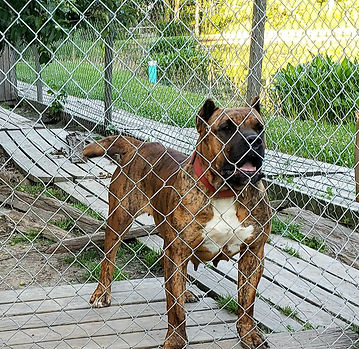 bearclaw kennels andromeda 1a.jpg