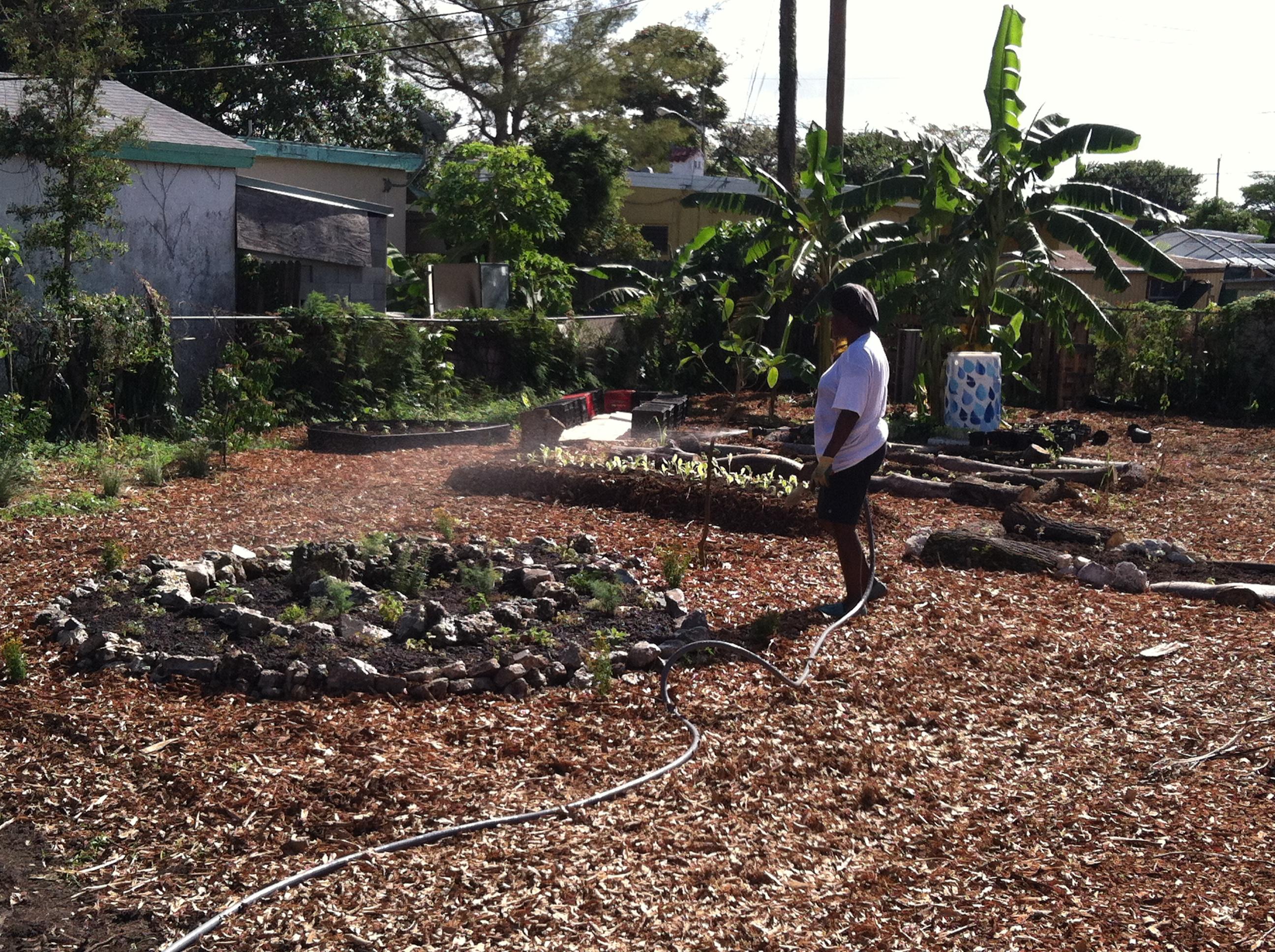 Urban Farming (3)