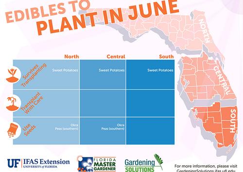 South Florida's Summer Edibles