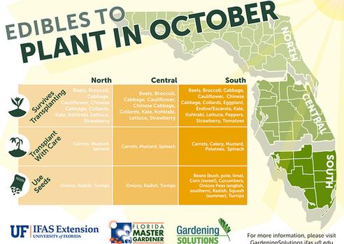 South Florida's Fall Edibles