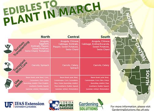 South Florida's Spring Edibles