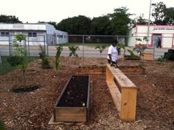 Urban Farming (19)