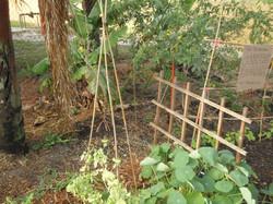Da permaculture