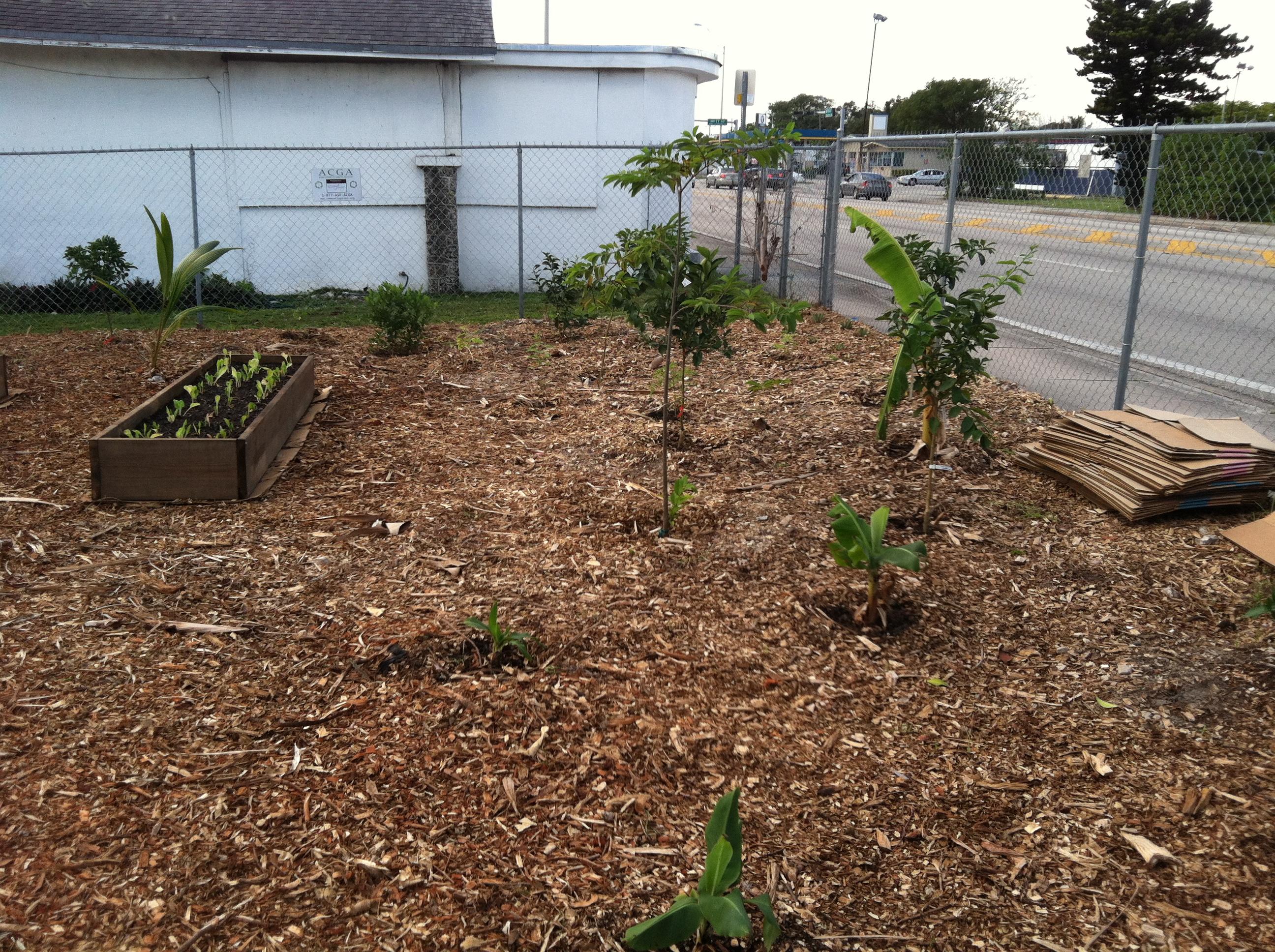 Urban Farming (20)