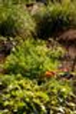 Da garden