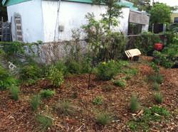 Urban Farming (7)