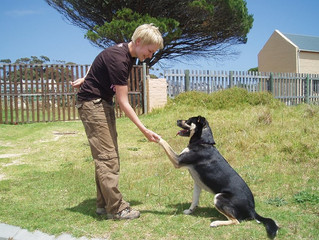 Operant Conditioning and Police Dogs