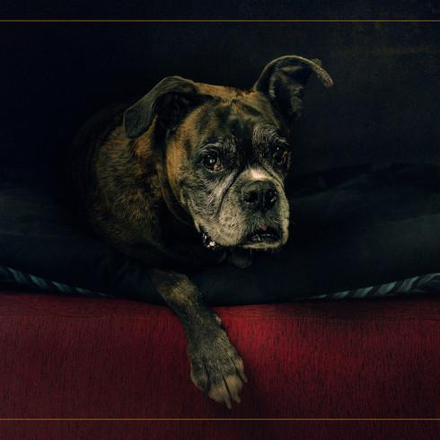 Artistic Pet Portait.jpg