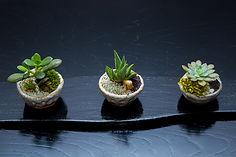 """HANADOJO presents """"One Tree Planted"""" Charit mini bonsai"""