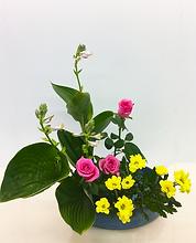 ぎぼうし 菊 バラ 写景盛花様式本位 色彩 2018.png
