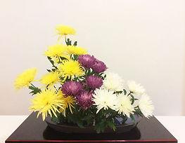 菊の多種刺し2017.jpg