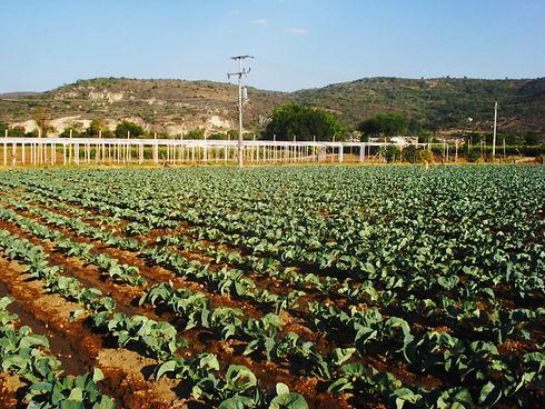 Agricultura_Michoacán.jpg