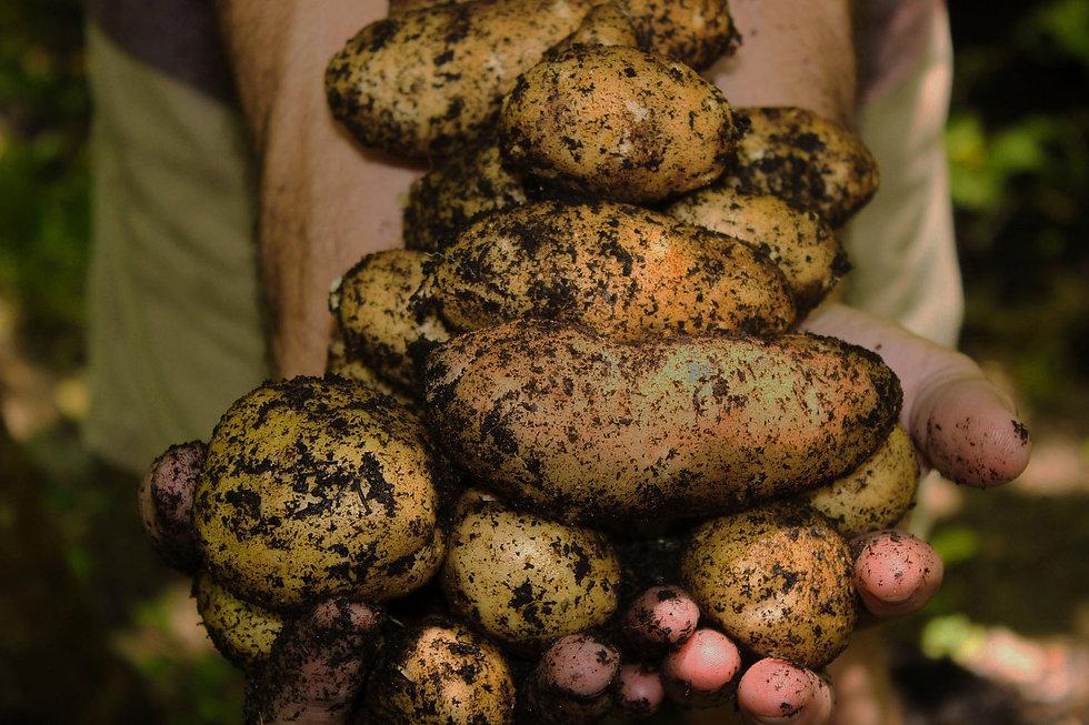 title potato pic even darker.jpg