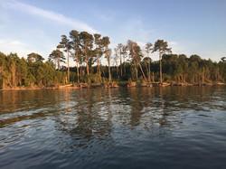 Bay side of Assateague Island