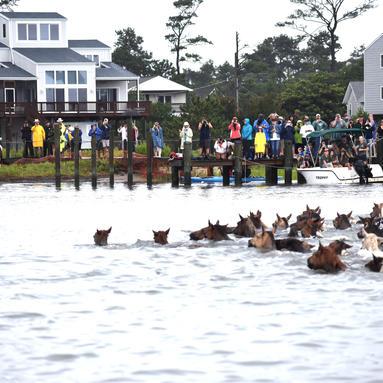 The Pony Swim