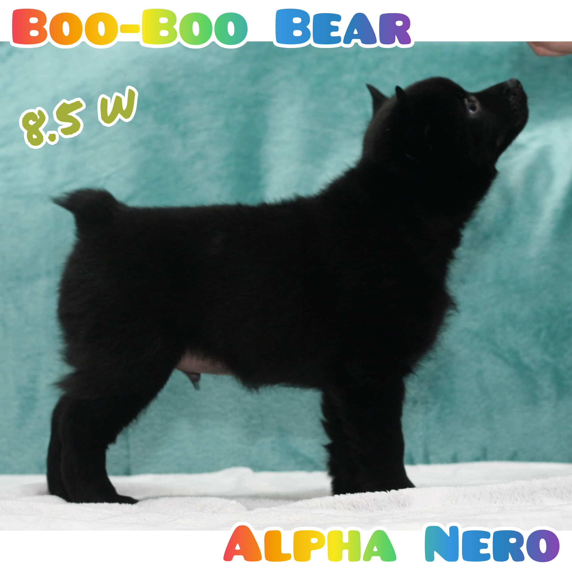 Boo-Boo Bear Alpha Nero