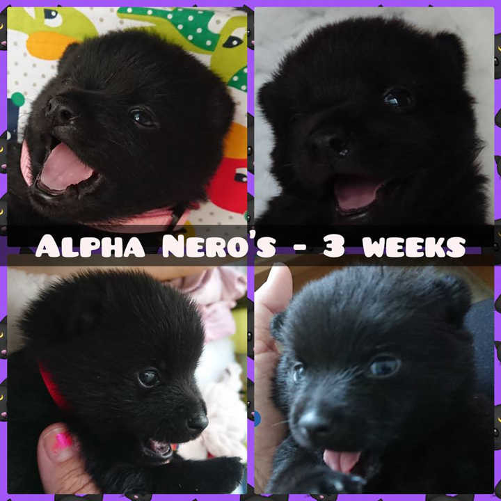 A-litter, 2 boys & 2 girls, 3 weeks old