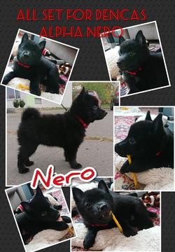 All Set For Dencas Alpha Nero