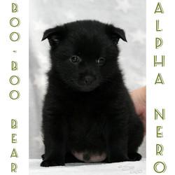 Boo-Boo Bear Alpha Nero