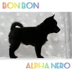 Bon Bon Alpha Nero