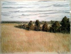 Grey Day Landscape