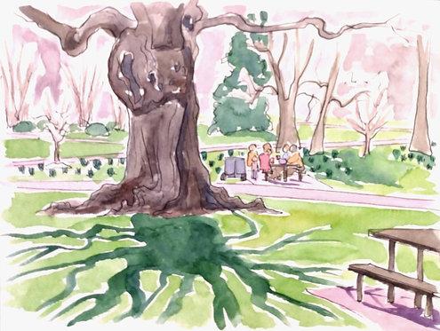 Overton Park Walk III
