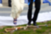 jumping the broom.jpg
